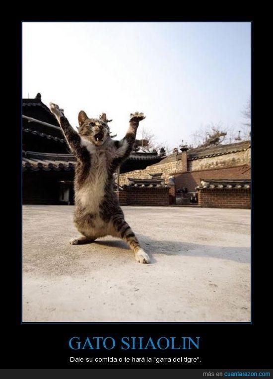 garra,gato,shaolin,tigre