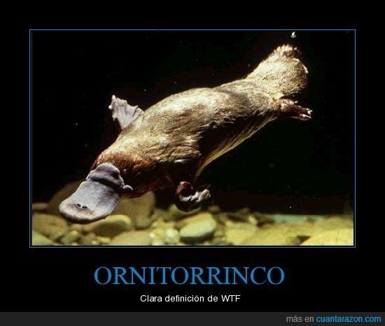 animal,deforme,Ornitorrinco,wtf