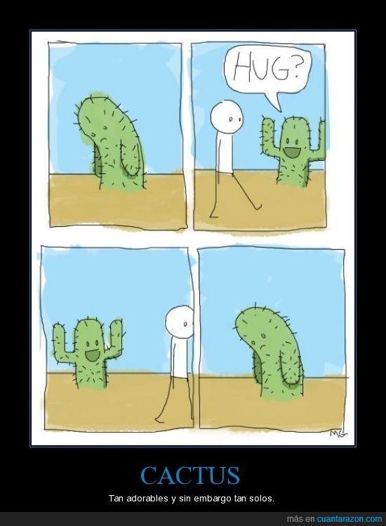 abrazo,cactus,solo