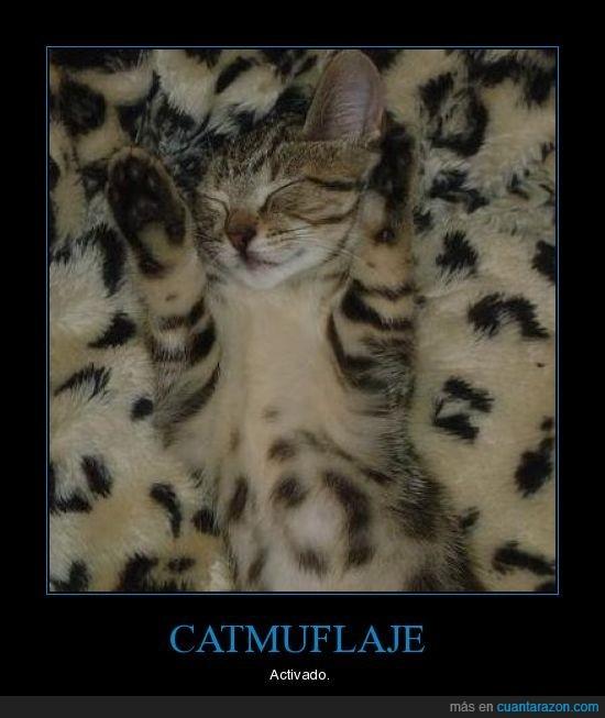 camuflaje,Gato,mono,piel