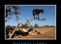 Enlace a HACER EL CABRA