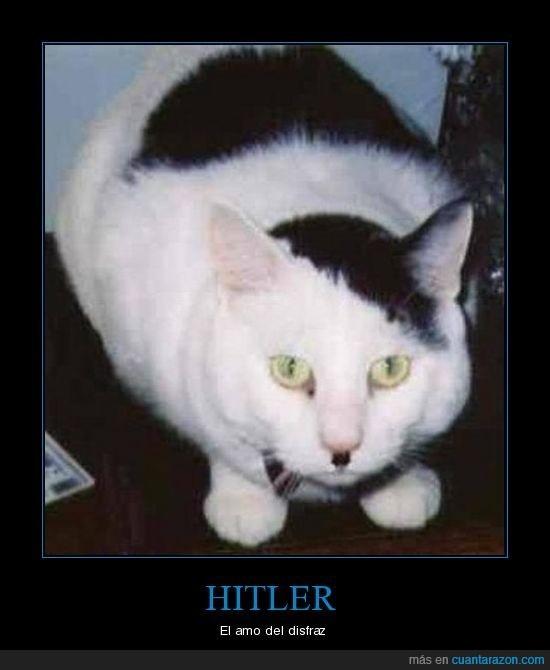 disfraz,gato,hitler