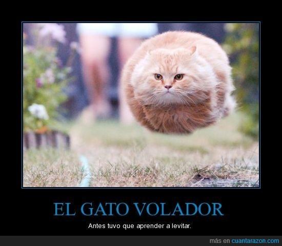 gato,levitar,volador
