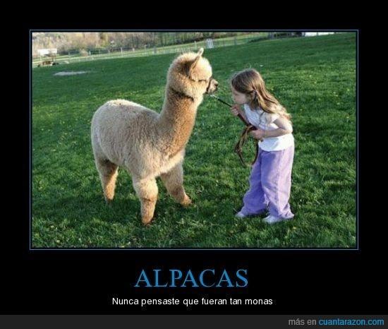 alpaca,niña
