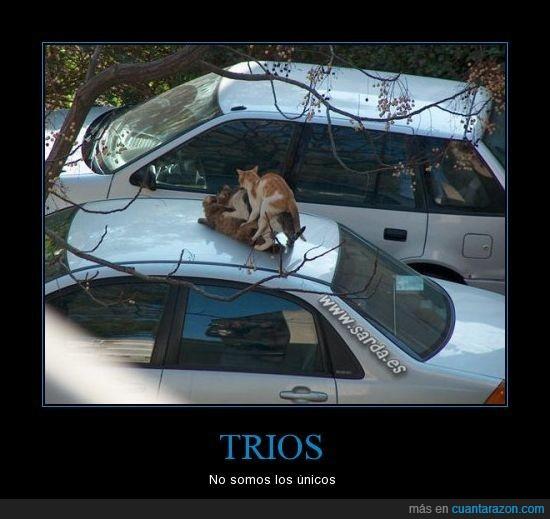coche,gatos,techo,trio