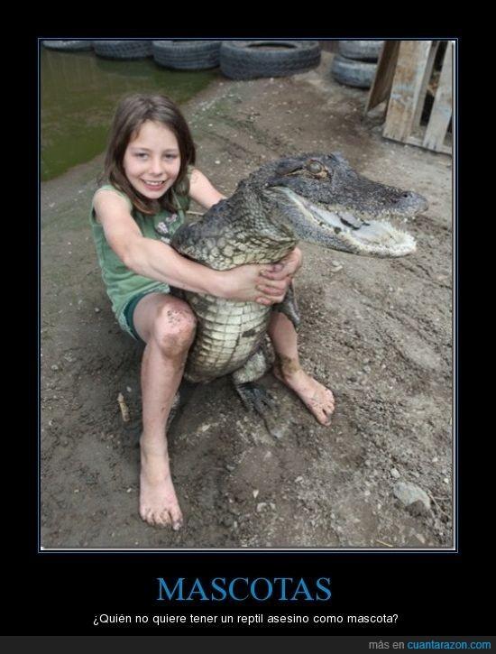 cocodrilo,mascota,reptil