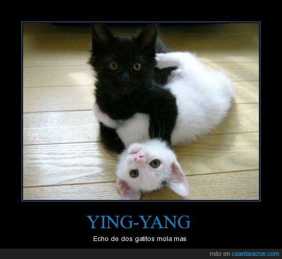 blanco,gatos,negro,ying yang