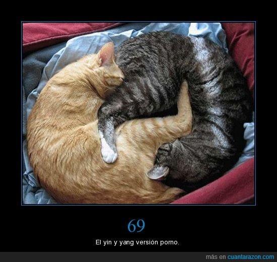 69,gatos,yang,yin
