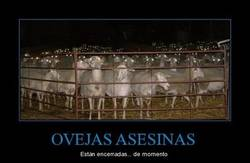 Enlace a OVEJAS ASESINAS