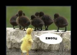 Enlace a EMOS