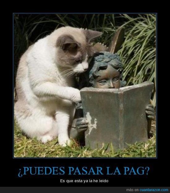 estatua,gato,leer,libro