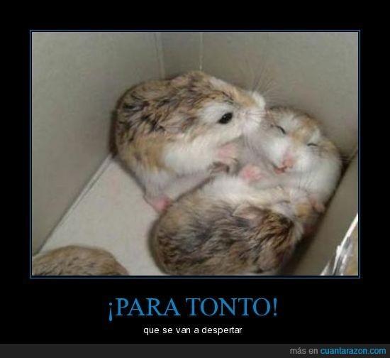hamster,juegos