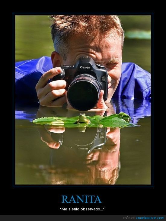 cámara,foto,rana