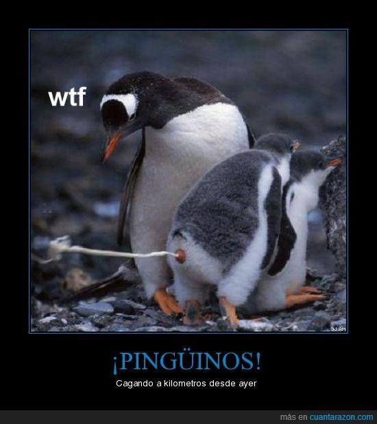cagar,pingüino