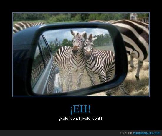 cebras,foto tuenti,retrovisor,^^