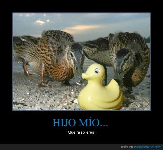 falso,hijo,pato