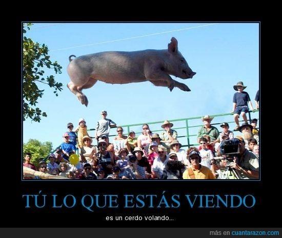cerdo,mixta,volando