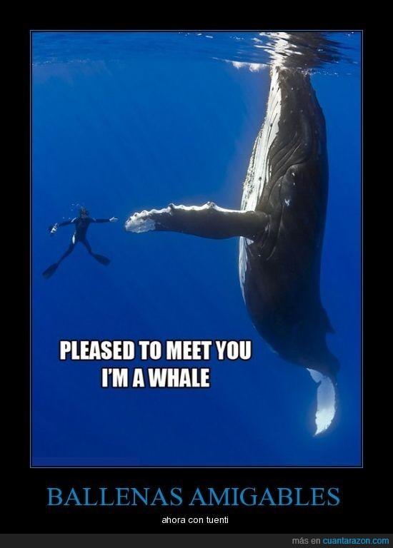ballenas,tuenti