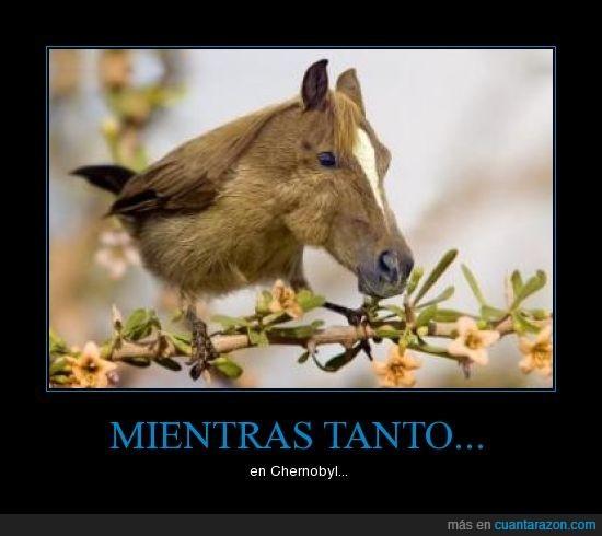 caballo,Chernobyl,mutación,pájaro