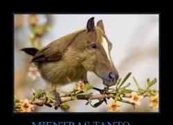 Enlace a MIENTRAS TANTO...