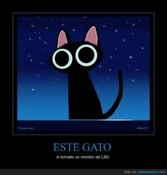 gato,lsd