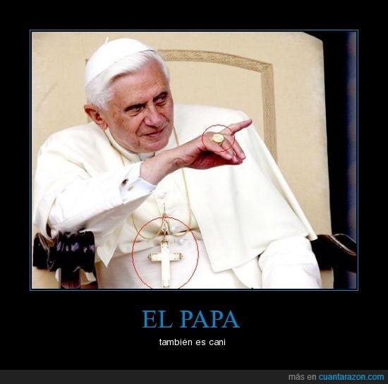 cani,dios mio es el fin del mundo,papa,plaga