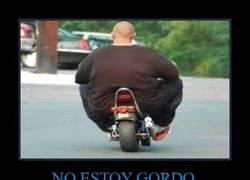 Enlace a NO ESTOY GORDO