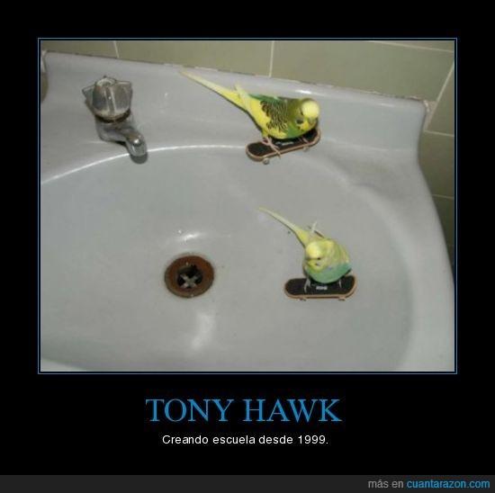 escuela,periquitos,tony hawk
