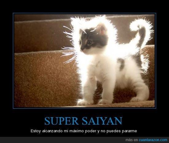 cat,gato,kitty,super saiyan