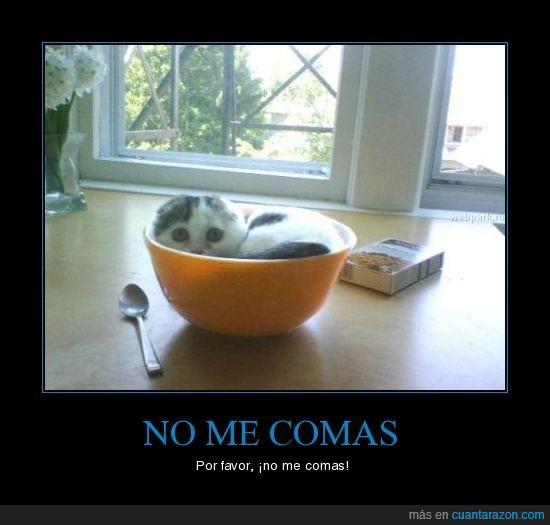 bol,gatito
