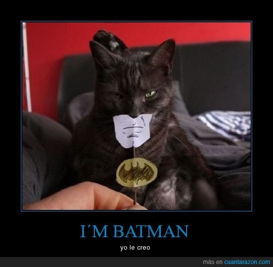 batman,gato,serio,verdadero