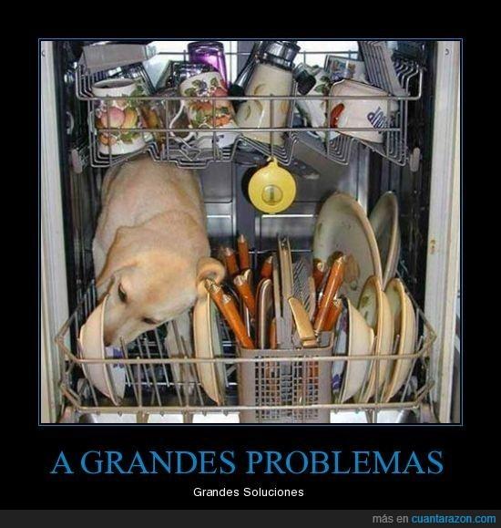 lavavajillas,perro,problemas,soluciones