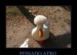 Enlace a PEINADO AFRO