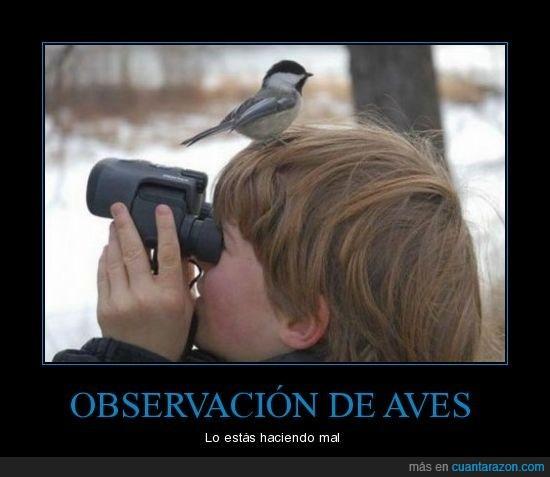 aves,observar