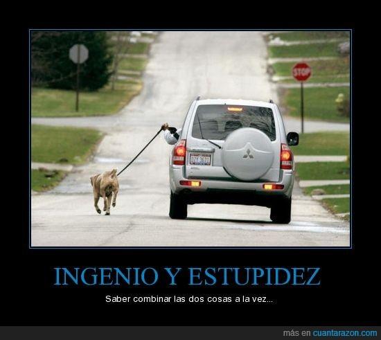 coche,crepúsculo,estupidez,perro