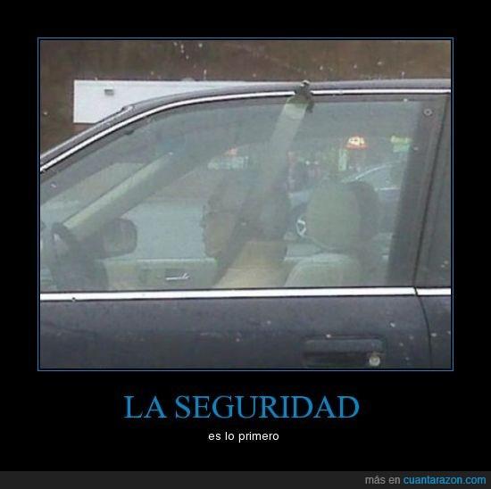 cinturon,coche,Seguridad