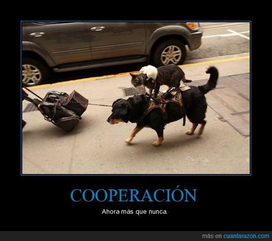 cooperación,gato,perro