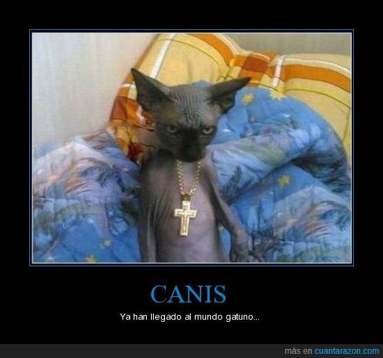 canis,gato,gatos,gatuno,mundo