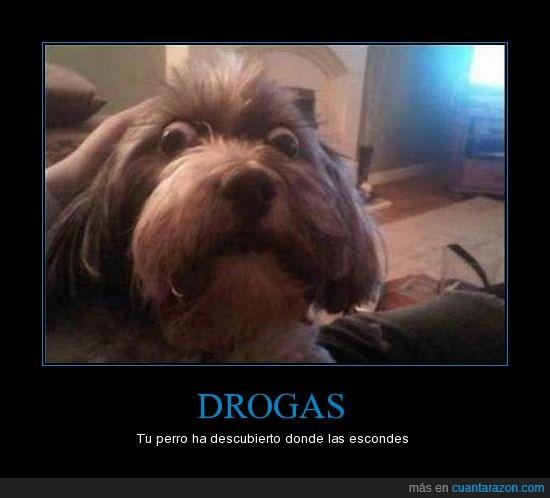 drogas,esconder,ojo,perro