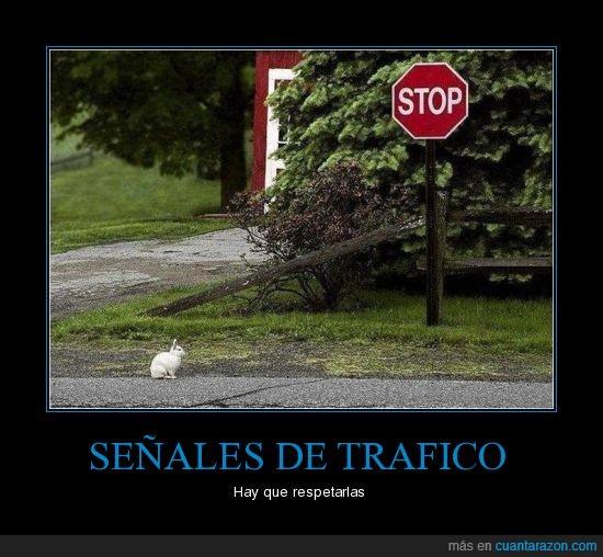 respetar,señales,tráfico