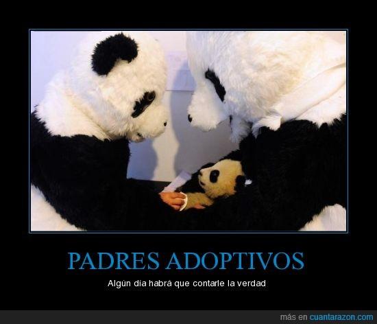 padres pandas falsos