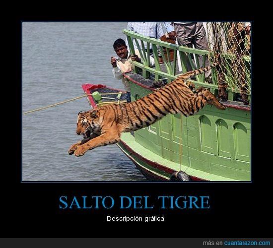 salto,tigre