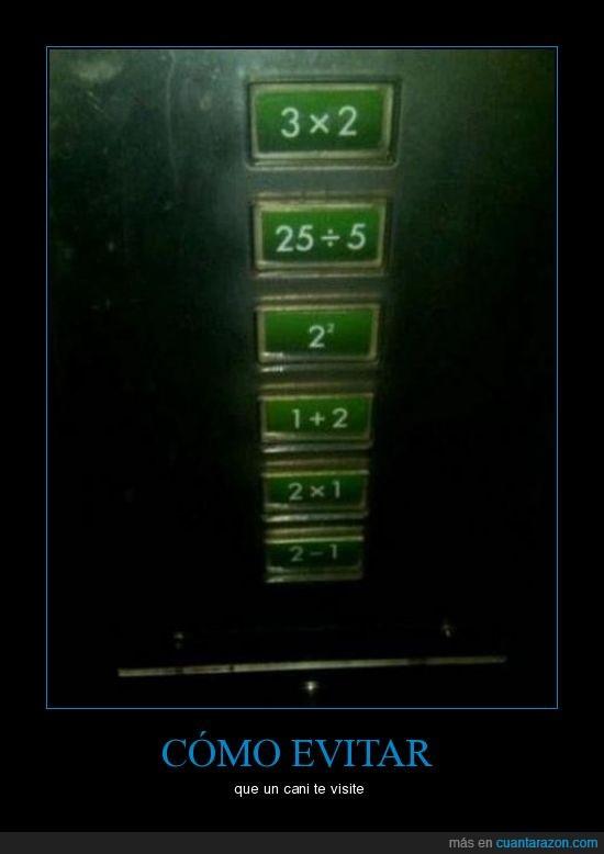 ascensor,cani