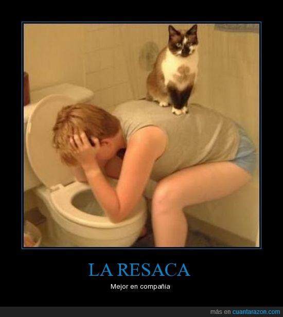 gato,resaca