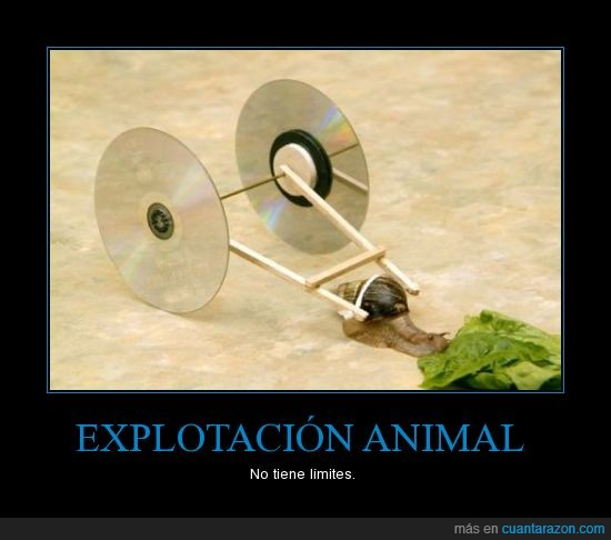 animal,caracol,explotacion