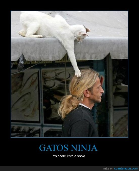 cabello,gato,ninja,zarpazo