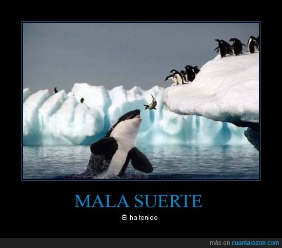 mala,orca,pingüinos,suerte