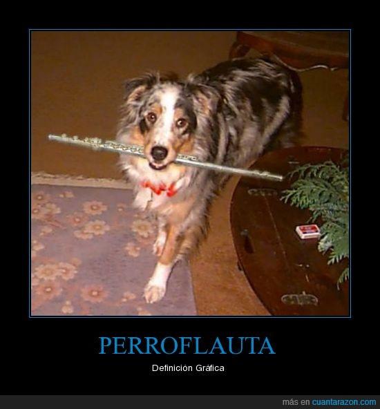 definicion,flauta,grafica,perro,Perroflauta