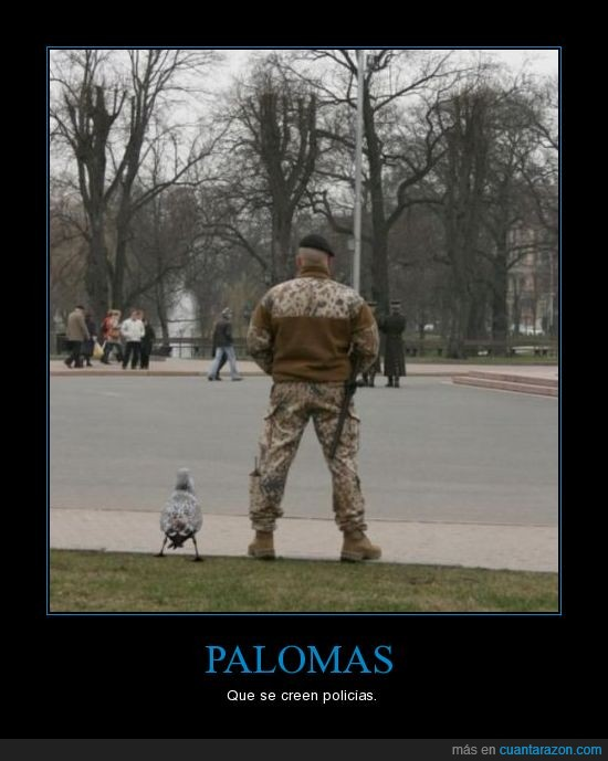 paloma,soldado,usa