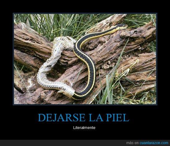 dejarse,mudar,piel,serpiente